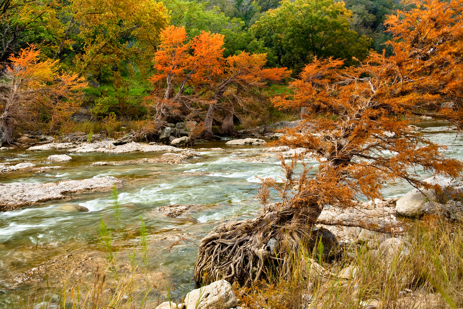 "Fall colors along the Pedernales River. The Cypress trees are leaning downstream, possibly because at times this peaceful scene becomes a roaring deluge.<br /> <br /> Purchase Prints, Framed Prints, Canvas Prints, Metal Prints, and On a Acrylic as well through this link - <a href=""http://fineartamerica.com/featured/fall-colors-along-the-pedernales-river-mark-weaver.html"">http://fineartamerica.com/featured/fall-colors-along-the-pedernales-river-mark-weaver.html</a>"